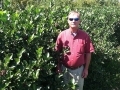 Randy with Aronia Shrub.JPG